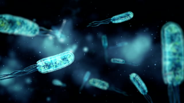 Medical video background - Coli bacteria