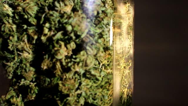 Medicinal marijuana buds rotating display video
