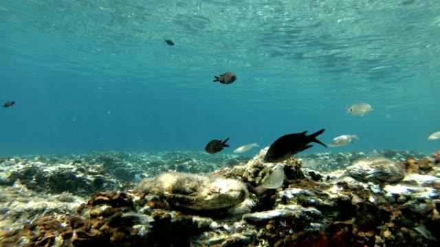 mediterranean fishes swimming - морская рыба стоковые видео и кадры b-roll