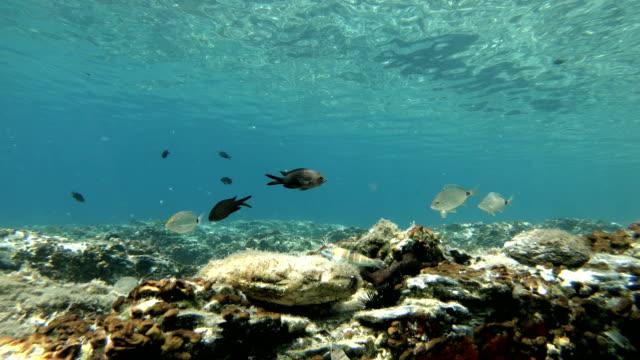 mediterranean fishes swimming - morze egejskie filmów i materiałów b-roll