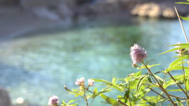 HD DOLLY: Mediterranean Flower video