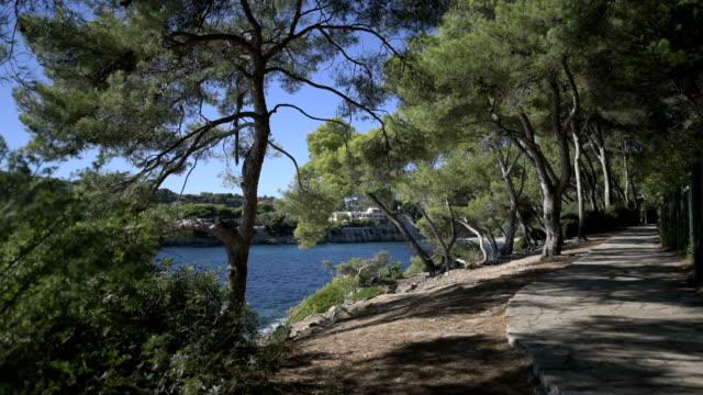 mittelmeer und die vegetation in saint-jean-cap-ferrat, französische riviera, frankreich - kieferngewächse stock-videos und b-roll-filmmaterial