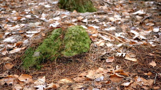 a medium sized boulder lodged in the soil of pennsylvania forest in late december. - joseph kelly stock videos and b-roll footage