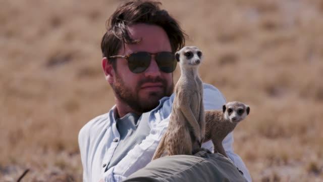 erdmännchen verwendet tourist als aussichtspunkt, botswana - großwild stock-videos und b-roll-filmmaterial