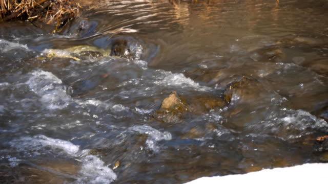 川の河岸の森、白い雪の中で川の氷の融解 - 湧水点の映像素材/bロール