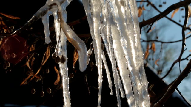 melting icicles on a frozen branch of a tree - full hd format video stock e b–roll