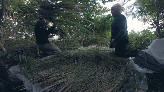 Men filling the hay in jungle.