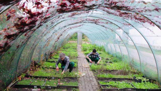 Men gardening in an eco-garden