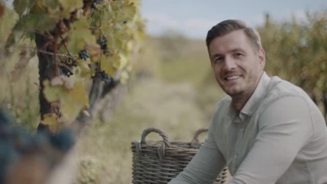män skörd färska druvor - wine box bildbanksvideor och videomaterial från bakom kulisserna