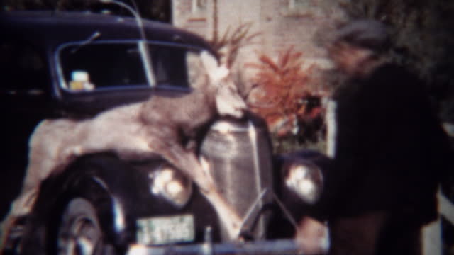 1939: Men inspect hunted dead whitetail deer strapped to classic car hood. video