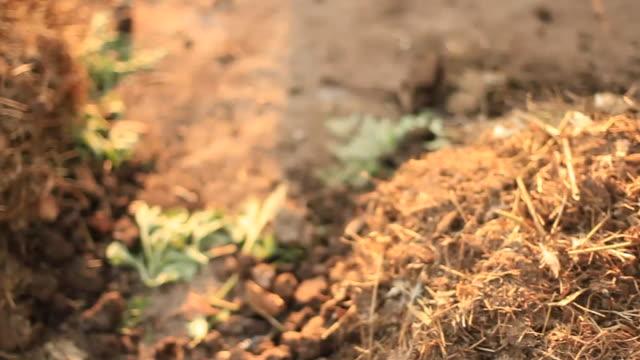 män på landsbygden afrikanska farm arbetar - rådig bildbanksvideor och videomaterial från bakom kulisserna