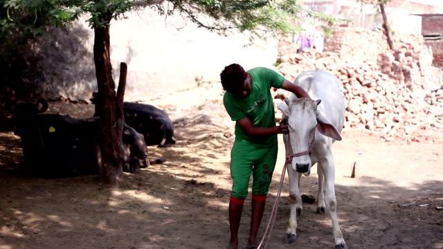 牛を持つ男性の肖像画 - ブラシ点の映像素材/bロール