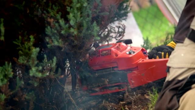 stockvideo's en b-roll-footage met mannen verwijderen tuin bomen met benzine kettingzaag - elektrisch gereedschap