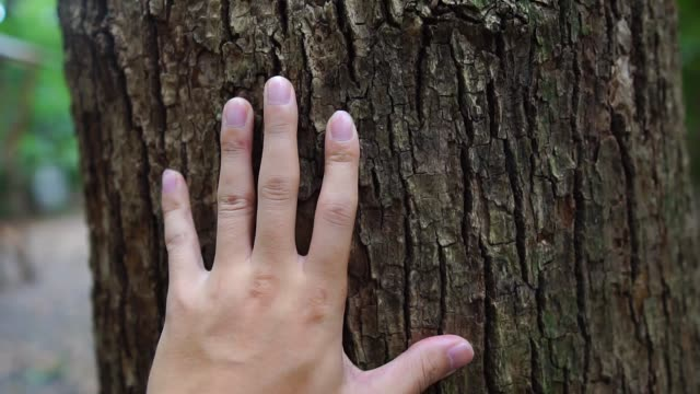 men's hand touching trees - forest bathing video stock e b–roll