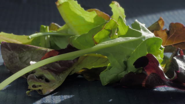 Mesclun Lettuce Leafs Falls onto a Pile of Spring Mix video