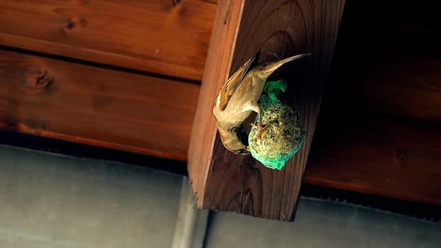 Mesh Bird Feeder and Birds Pecking 2 video