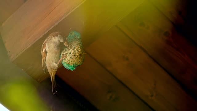 Mesh Bird Feeder and Birds Pecking 3 video