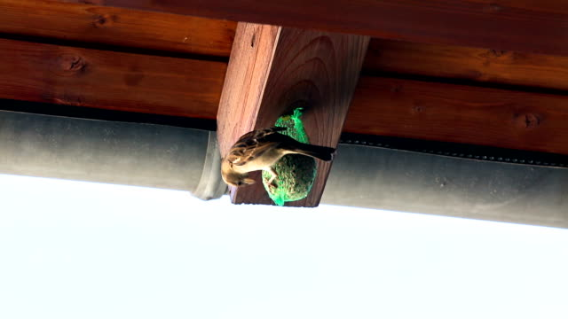 Mesh Bird Feeder and Birds Pecking video