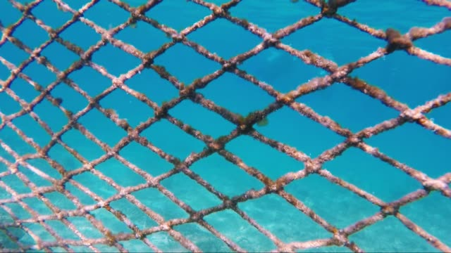 netz für den schutz der küste von seefisch - netzgewebe stock-videos und b-roll-filmmaterial