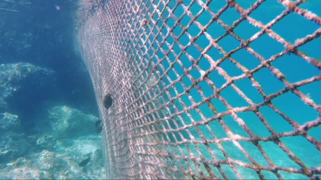 Mesh to prevent fish from entering the resort video
