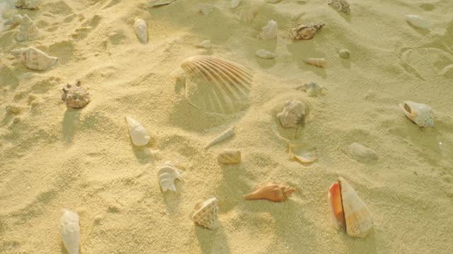 vidéos et rushes de message dans une bouteille sur une plage sablonneuse - coquillage