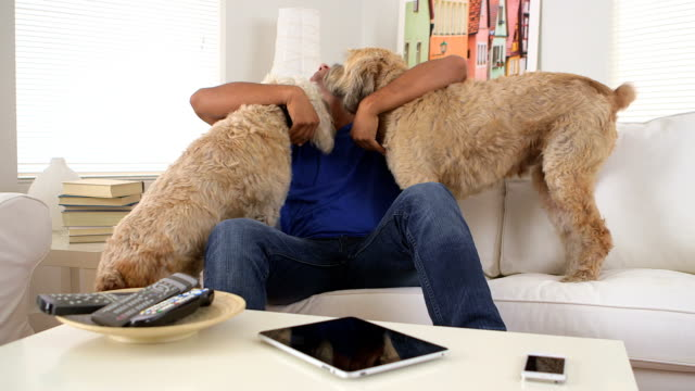 Mexican man playing with pet dogs video