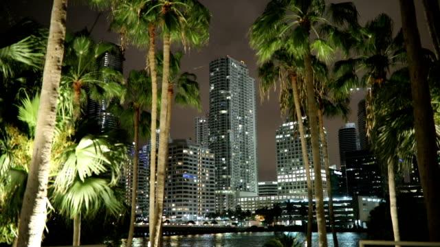 Miami through the palm trees - video