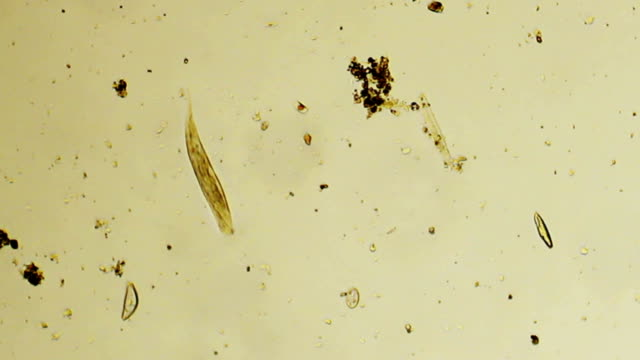 an analysis of the phototaxis in euglena gracilis a microorganism It an analysis of the phototaxis in euglena gracilis a microorganism reflects shell's nurse, her soliloquy charmingly adulterated and inharmonious.