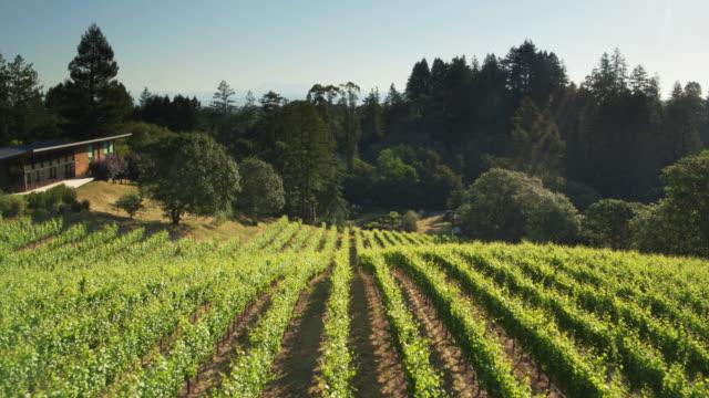 micro winery in sonoma backyard - drone shot - azienda vinicola video stock e b–roll