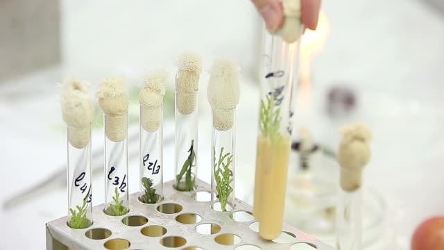 微生物学的検査作業、テストチューブ ビデオ