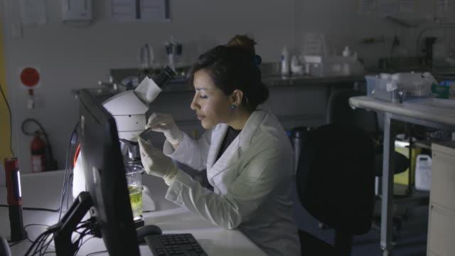 vídeos de stock, filmes e b-roll de microbiologista olhando para amostra - amostra científica