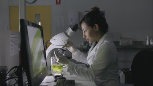 vídeos de stock, filmes e b-roll de microbiologista trabalhando em laboratório - amostra científica
