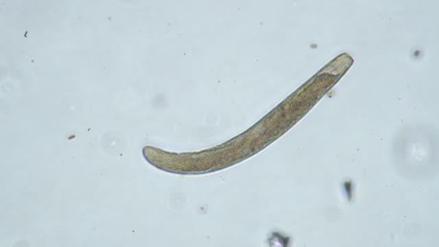 Microorganism video