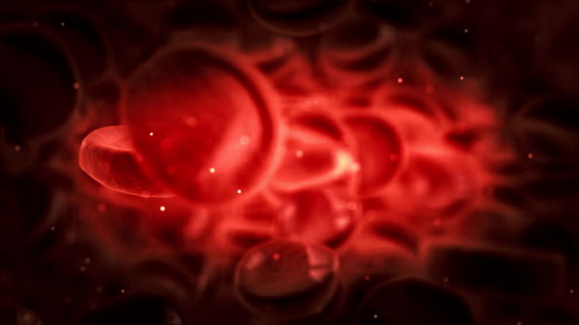 microscope view of red blood cells in an artery Red blood cells moving in the blood stream. blood vessel stock videos & royalty-free footage