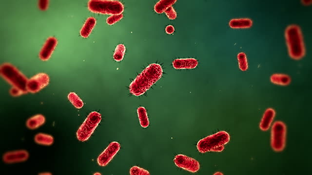 Microscopic Bacteria Medical Background