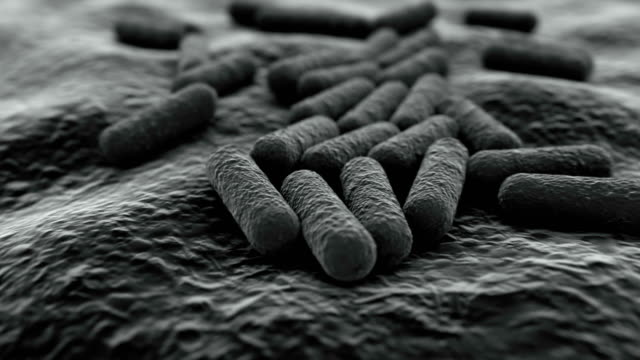 4K Microscopic view of a bacteria colony.