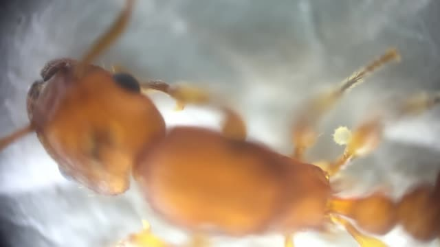 Microscopic View of an Ant