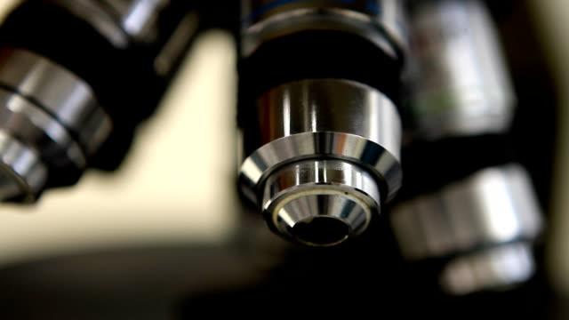 Microscopy (HD) video
