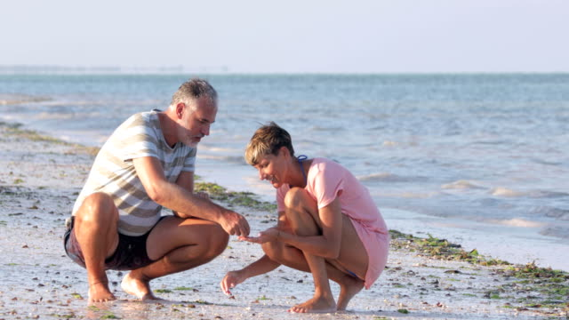 Mid Adult Couple Collecting Sea Shells on Beach Mid Adult Couple Collecting Sea Shells on Beach. animal shell stock videos & royalty-free footage