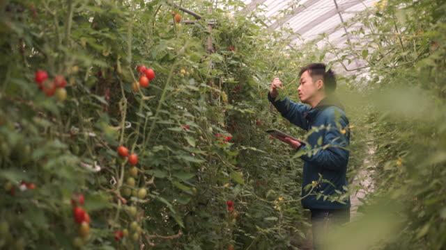 中年の農家動作の温室 ビデオ