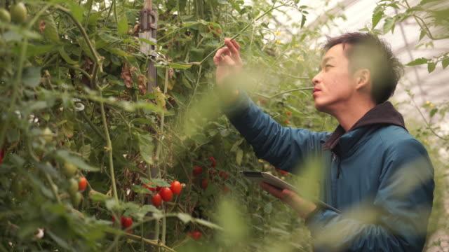 中年の農家動作の温室 - タブレット端末点の映像素材/bロール