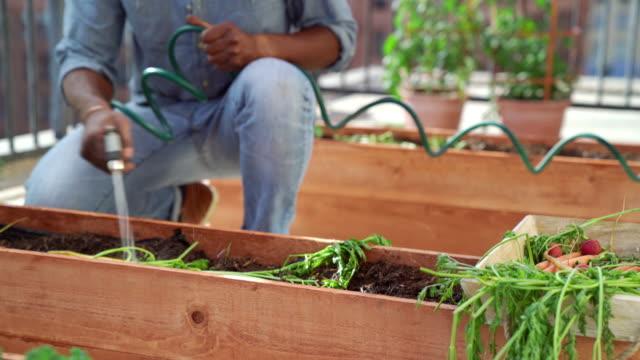 mitte männchen bewässerung der pflanzen in seinem garten auf dem dach - dachgarten videos stock-videos und b-roll-filmmaterial