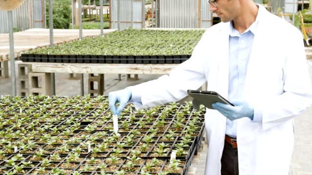 vídeos y material grabado en eventos de stock de medio científico adultos realización de experimento de vida de planta en invernadero - botánica