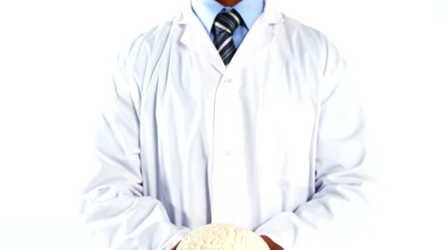 Mid section of doctor holding human brain model Mid section of doctor holding human brain model on white background cerebellum stock videos & royalty-free footage