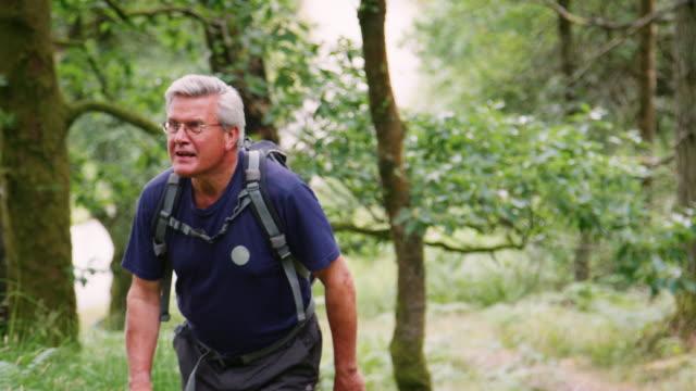 orta yaşlı beyaz adam bir ormanda, lake district, i̇ngiltere'de bir iz üzerinde hiking - orta yaşlı adam stok videoları ve detay görüntü çekimi