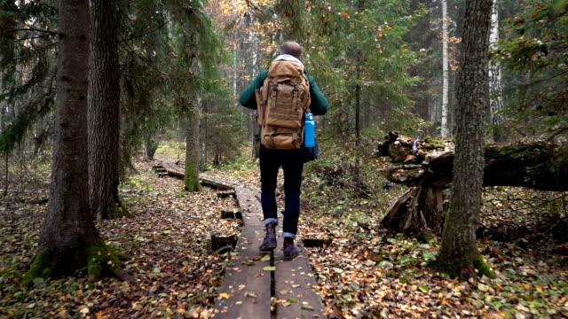 中年男自然公園で秋の森で生態学的な自然歩道 - 国立公園点の映像素材/bロール