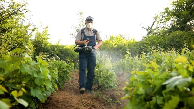 vídeos de stock e filmes b-roll de a middle-aged farmer spraying pesticide in vineyard - pulverizar