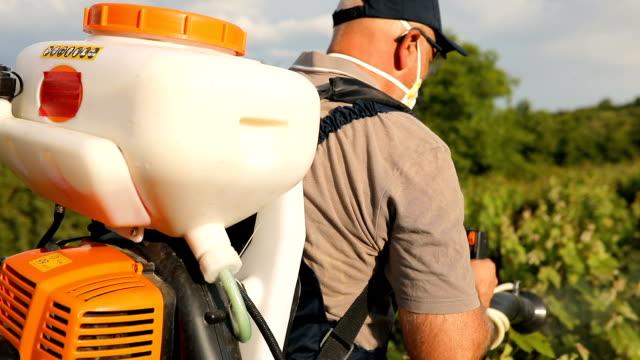 a middle-aged farmer spraying pesticide in vineyard - fertilizzante video stock e b–roll