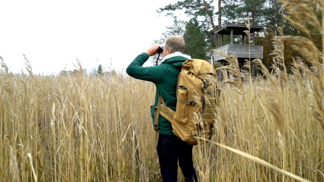 vídeos de stock e filmes b-roll de a middle-aged man with a backpack goes through the reeds - reserva natural