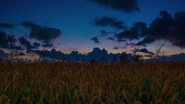 Midwestern Sunset over cornfields and farmers in Iowa and Nebraska Time Lapse Full HD